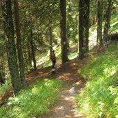 Waldweg_Rückweg