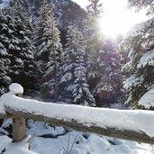 D-0486-winterwald-valser-tal-schnee.jpg