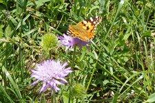 Schmetterlingsweg St. Sigmund